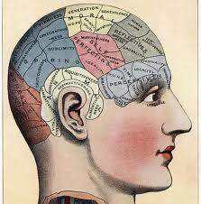 brain image 2