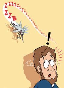 mosquito buzz